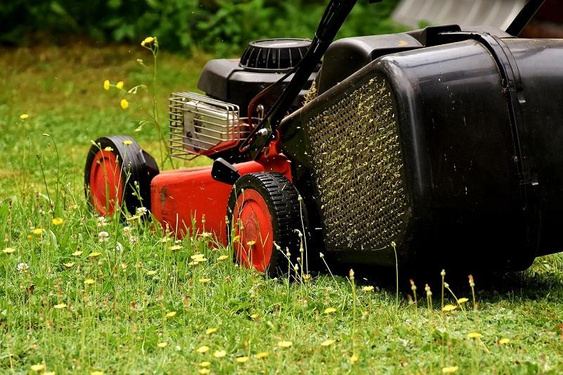 Košnja trave poskrbi, da bodo njeni poganjki močnejši